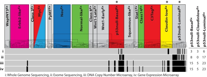 Murine Trp53 -null tumor datasets. Sequencing and microarray technologies were used to produce four Trp53 -null tumor datasets of varying sizes: (i) whole genome sequencing ( n =12), (ii) exome sequencing ( n =25), (iii) DNA copy-number microarray ( n =43) and (iv) gene expression microarray ( n =43). The intrinsic class of each sample is displayed on the dendrogram, with colored boxes being previously identified human subtype counterparts ( Pfefferle et al., 2013 ). The hierarchical clustering location of each p53-null tumor within the datasets is displayed as a vertical black strip. *The Trp53 -null transplant model produces heterogeneous tumors that primarily develop into one of these three murine expression subtypes. For each dataset, the number of tumors studied from each of the three murine classes highlighted by '*' is displayed on the right-hand side of the figure.