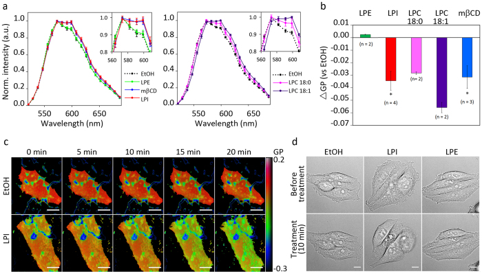 LPL treatment changes plasma membrane lipid packing. (a) HEp-2 cells were treated with 10 μM LPI, LPE, LPC 18:0, LPC 18:1 or 0.2% ethanol (EtOH) for 20 min, or with 5 mM mβCD for 45 min, prior to staining with 10 nM NR12S. Spectral imaging was started 7 min after the addition of NR12S and continued for up to 15 min. The analysis of the spectra was performed on at least 20 manually selected regions of the plasma membrane for each condition. The panel to the left shows the data from one of three independent experiments with LPI, LPE and mβCD and the panel to the right shows data from one of two independent experiments with LPC 18:0 and LPC 18:1 (mean ± STD). (b) The average GP value for each selection was quantified as described in materials and methods, and the figure shows differences in GP values between the EtOH and the treated samples (mean ± SEM; n ≥ 2). (c) Pseudo-coloured TIRF images of the basal plasma membrane following cell treatment with 0.2% EtOH or 10 μM LPI. The dark blue structures are the coating of the Lab-Tek dish stained by NR12S. The colour scale for GP values is shown on the right; scale bar 10 μm. (d) Differential interference contrast images showing morphology of HEp-2 cells, taken 10 min prior to and 10 min after addition of 0.2% EtOH, 10 μM LPI or 10 μM LPE; scale bar 10 μm.