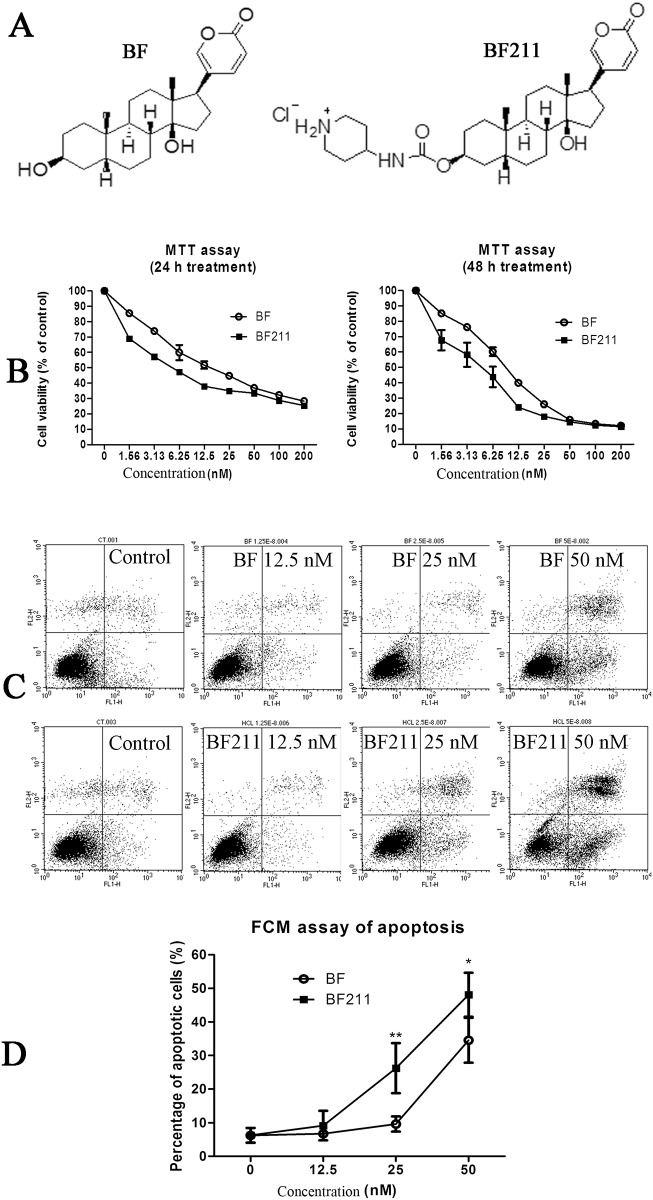 Inhibiting effects of BF and BF211 on the proliferation of A549 cells. (A) Chemical structures of BF and BF211. (B) The cell viability (MTT assay result) of A549 cells treated with various concentrations of BF or BF211 for 24 or 48 h. The data comprise the statistical results of three independent experiments. (B) A representative of the flow cytometry analysis results of apoptosis induced by 24 h treatment of BF or BF211 at different concentrations. (D) The statistical analysis results of the percentage of apoptotic cells after treatment with BF or BF211 at different concentrations for 24 h. The data comprise the statistical results (n = 3, mean ± SEM) of three independent experiments. * p