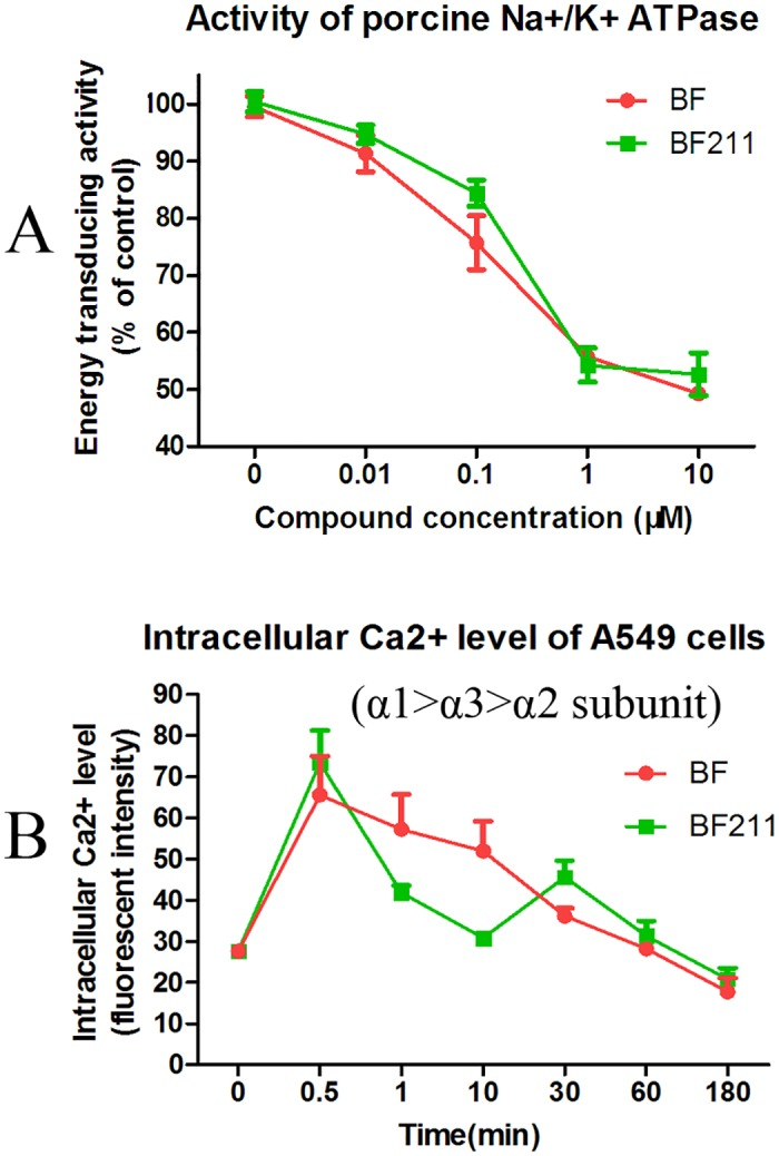 Inhibitive effects of BF or BF211 on the activity of porcine cortex Na+/K+-ATPase and the intracellular Ca2+ level of A4549 cells. (A) The activity of Na + /K + -ATPase extracted from porcine cerebral cortex in the presence of BF or BF211 at different concentrations was determined. The data are the statistical results (n = 3, mean ± SEM) of three independent experiments. (B) The level of intracellular Ca2+ level in <t>A549</t> cells treated with 50 nM BF or BF211 for different time periods. The data are the statistical results (n = 3, mean ± SEM) of three independent experiments.
