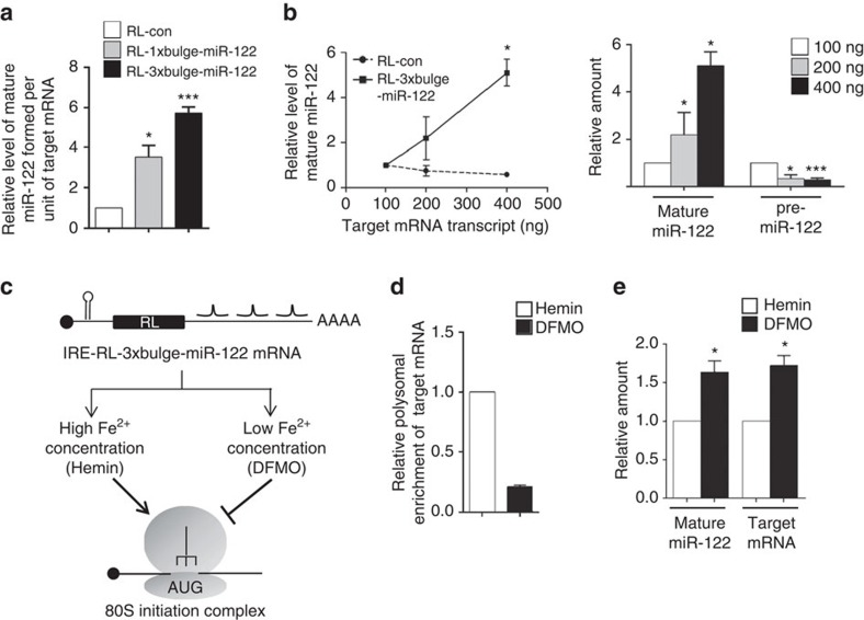 Effect of target mRNA concentration on substrate-dependent miRNA increase in human cells. ( a ) Amount of mature miR-122 formed per unit of target mRNA in HEK293 cells transfected with pmiR-122 and respective reporter plasmids. Values were calculated by normalizing the amount of mature miR-122 against the amount of respective target mRNA level and plotted. ( b ) Effect of increasing concentration of target mRNA on mature miRNA levels. HEK293 cells expressing pre-miR-122 were transfected with increasing amounts of in vitro -transcribed mRNA (RL-con or RL-3 × bulge-miR-122) and mature miR-122 and pre-miR-122 levels were quantified 6 h post transfection. In the left panel, changes in relative level of mature miR-122 has been plotted for experiments done with RL-con or RL-3 × bulge-miR-122. Relative change of mature and pre-miR-122 in the presence of different amounts of RL-3 × bulge-miR-122 was plotted (right panel). Values obtained with 100 ng of transcript to transfect 2 × 10 5 cells were considered as 1. ( c ) IRE-RL-3 × bulge-miR-122 mRNA with Ferritin IRE element in 5′-UTR is schematically depicted. ( d ) Cells transfected with pre-miR-122 and IRE-RL-3 × bulge-miR-122 were split 24 h post transfection and iron chelator DFMO (100 μM) or Fe 2+ source Hemin (50 μM) was added after an additional 6 h. Cells were harvested after 16 h post Hemin or DFMO addition for analysis. Polysomal enrichment of IRE-RL-3 × bulge-miR-122 was estimated by normalizing polysomal mRNA content by total mRNA level. ( e ) Target mRNA and mature miR-122 level were measured in cells treated with either Hemin or DFMO. Paired two-tailed Student's t -tests were used for all comparisons. * P