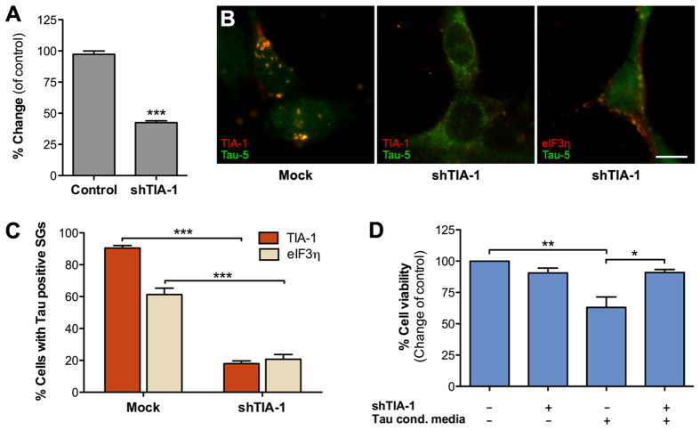 Tau localization to stress granules requires TIA-1. ( A ) TIA-1 shRNA knockdown efficiency determined by qPCR following shRNA plasmid transfection of HEK293T cells. Levels of TIA-1 mRNA were normalized to GAPDH mRNA levels (n = 2). ( B ) TIA-1 was transiently knocked down in HEK293T cells (middle and right images) that were then exposed to Tau-GLuc-conditioned media and stained with Tau-5 and stress granule marker antibodies. The middle image shows typical cells with mostly cytosolic, non-punctate staining of Tau. The image on the right shows an example of a cell with SGs costaining with Tau and eIF3η. ( C ) Quantitative analysis of Tau-positive stress granule formation. SGs were present in the majority of cells exposed to Tau media when TIA-1 is normally expressed but were significantly decreased when TIA-1 was knocked down. Similar results were obtained with both TIA-1 and eIF3η staining (n = 3). ( D ) Resazurin-based cell viability assay showed that TIA-1 knockdown had no effect on cell viability per se but was able to improve viability in cells exposed to Tau-GLuc-conditioned media (n = 3). Scalebar = 10 μm; average +/− SEM is shown; ***p