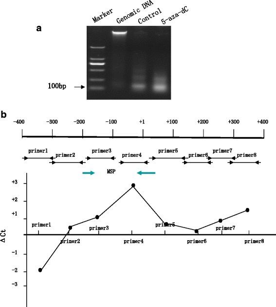 5-aza-dC may alter the chromatin structure of CLDN6 for transcription in MCF-7 cells. a MCF-7 cells were treated with micrococcal S7 nuclease to produce mononucleosomal genomic DNA fragments (100 ∼ 200 bp). b Primer pairs were designed between -400- + 400 bp of CLDN6 proximal promoter. Micrococcal S7 nuclease preferentially digested DNA that was not organized in nucleosomes. Hence, DNA organized in nucleosomes would be less prone to nuclease digestion and amplified to the qPCR threshold at a lower Ct compared to the less organized DNA. c Purified mononucleosomal DNA was amplified using primer pairs (depicted in ( b )) and the resulting product was quantified using SYBR green dye in a quantitative PCR. The difference in Ct between 5-aza-dC treating MCF-7 and DMSO treating MCF-7 cells (as control) for each primer pair was plotted. The positive numbers suggested that in 5-aza-dC treating MCF-7 cells this part of the DNA was less organized into nucleosomes and more prone to nuclease digestion compared to control cells. CLDN6, Claudin-6; 5-aza-dC, 5-Aza-2'-deoxycytidine