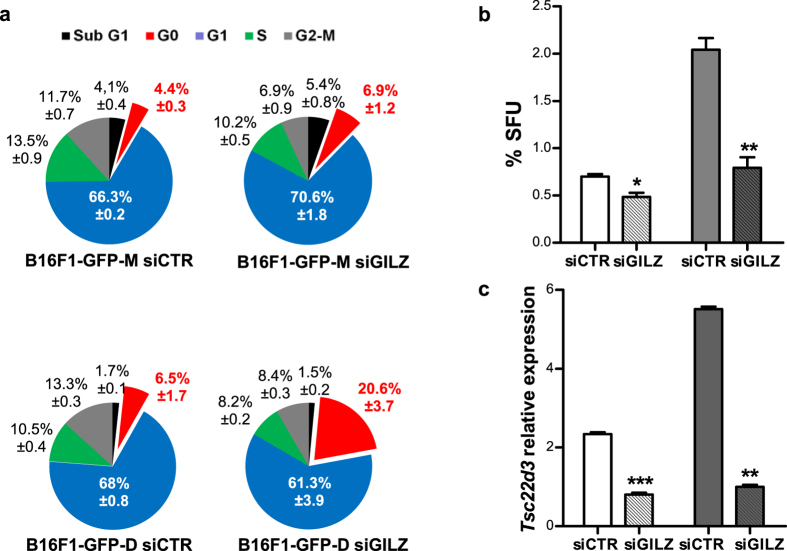 Down-regulation of GILZ expression induced quiescence of dormant DMC-derived B16F1-GFP-D cells in the G0 phase. ( a ) Cell cycle analysis of dormant DMC-derived B16F1-GFP-D (lower panel) and maternal B16F1-GFP-M (upper panel) cells transfected with control (left) or GILZ-specific (right) siRNA revealed that the dormant DMC-derived cells possessed the novel, GILZ-dependent ability to control the G0-to-G1 transition in addition to the known GILZ-dependent ability to control the G1-to-S transition of the cell cycle. A fraction of cells in the G0 phase of the cell cycle are shown in red. ( b ) Sphere-forming units (SFUs) formed by B16F1-GFP-D (grey) or B16F1-GFP-M (white) cells transfected with control and GILZ-specific siRNA. ( c ) qRT-PCR assay of Tsc22d3 expression in spheres obtained from B16F1-GFP-M and B16F1-GFP-D cells transfected with either control or GILZ-specific siRNA and cultured for 7 days. The values indicate the level of GILZ-encoding mRNA relative to the control (B16-F1GFP-M adherent cells) (ΔΔCt); siCTR (control siRNA), siGILZ (GILZ-specific siRNA). The results represent 3 independent experiments. *p