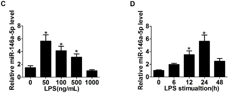 Lipopolysaccharide (LPS) up-regulated toll-like receptor 4 (TLR4) and α-smooth muscle actin (α-SMA) expression and down-regulated miR-146a-5p expression: ( A , B ) LX2 cells were treated with different amounts of LPS (0~1000 ng/mL) for 24 or 48 h and then quantitative real-time PCR (qRT-PCR) were used to detect the expression of TLR4 and α-SMA; ( C ) miR-146a-5p expression was examined by qRT-PCR after treatment with different amounts of LPS (0~1000 ng/mL) for 24 h; and ( D ) miR-146a-5p expression was assessed by qRT-PCR after treatment with 50 ng/mL of LPS for the various times (0, 6, 12, 24 and 48 h). * p