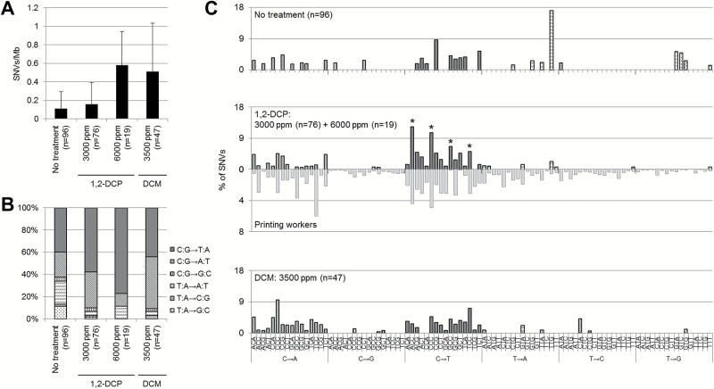 The mutational signature of 1,2-DCP in S.typhimurium TA100 partially recapitulates the printing workers' cholangiocarcinoma signature. ( A ) Number of SNVs in 1,2-DCP- and DCM-exposed TA100, except for the hisG gene target site. ( B ) Single-nucleotide DNA substitution profiles in TA100 exposed to 1,2-DCP or DCM except for the hisG gene target site. ( C ) Trinucleotide mutational pattern of TA100 exposed to 1,2-DCP or DCM except for the hisG gene target site. Clones exposed to 1,2-DCP harbored Np C pC to Np T pC changes (indicated by the asterisks). This signature partially recapitulates the printing workers' cholangiocarcinoma signature as shown below the 1,2-DCP-exposed TA100 panel. The printing workers' signature is the mean of the frequency of secondary characteristic mutational changes in four patients shown in Figure 1E . The mutational signatures were normalized using the trinucleotide frequency in the genome. The signature of 1,2-DCP was obtained from the sum of the 3000 and 6000 ppm exposure data.
