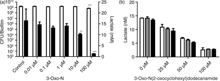 Dose response of 3-Oxo-N and competition between 3-Oxo-N and <t>C12-HSL.</t> a) Total biofilm formation and total lactic acid accumulation for biofilms grown in the presence of different concentrations of 3-oxo- N -(2-oxocyclohexyl)dodecanamide. White bars: biofilm formation expressed as CFU/biofilm; black bars: lactic acid accumulation expressed in mM per biofilm after 3-h incubation in BPW containing 0.2% sucrose. Statistical significance compared to the control is shown (* P