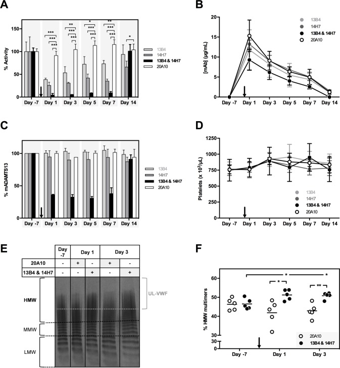 Characterization of the ex vivo inhibitory effect of anti-mMDTCS mAbs 13B4 and 14H7. Adamts13 +/+ mice (n = 4, per condition) were injected with 2.50 mg/kg of mAb 13B4, 14H7 or 20A10 or with a combination of mAbs 13B4 and 14H7 (1.25 mg/kg each) on day 0 (black arrow). The optimal injection dose of mAb was determined in separate experiments (data not shown). Blood was retrieved 7 days before ('day -7') and 1, 3, 5, 7 and 14 days post injection. (A) The influence of the different mAbs on the proteolytic activity of mADAMTS13 was determined using the FRETS-VWF73 assay. Activities were calculated based on the slope of the proteolysis reactions ( S1 Fig ). (B) Plasma mAb levels (μg/mL) were determined using ELISA. Plates were coated with recombinant mADAMST13, blocked and plasma of the respective mice was added. Bound mAbs were detected using GAM-HRP. (C) The amount of mADAMTS13 (%) in plasma was determined using ELISA. Plasma mADAMTS13 was captured using the anti-mT2-CUB2 mAb 9F2. After blocking, the respective plasma samples were added. Finally, bound mADAMTS13 was detected using the polyclonal anti-mADAMTS13 rabbit IgG and GAR-HRP. (D) Platelet counts were measured of the respective mice samples. Error bars represent the SD (n = 4, per condition). (E) The plasma mVWF multimer pattern was determined for a new cohort of treated mice (n = 5, per condition) 7 days before ('day -7') and 1 and 3 days post injection of mAb(s) 20A10 or the combination of mAbs 13B4 and 14H7). Representative multimer patterns are given. Low, middle and high molecular weight (respectively LMW [1–5 bands], MMW [6–10 bands] and HMW [ > 10 bands]) multimers and UL-VWF multimers (brace) are indicated. (F) The percentage HMW multimers was calculated using the ImageJ 1.48v software.
