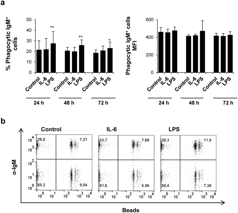 IL-6 has no effect on the phagocytic capacity of IgM + B cells. Splenocytes were cultured in the presence of IL-6 (200 ng/ml) or LPS (100 μg/ml) for 24, 48 or 72 h at 20 °C. Non-stimulated controls were also included. After the different incubation periods, cells were exposed to fluorescent beads for a further 3 h at 20 °C. Non-ingested beads were removed by centrifugation over a cushion of 3% (w/v) <t>BSA</t> in <t>PBS</t> supplemented with 4.5 (w/v) D-glucose (Sigma). ( a ) Data are shown as mean percentage of phagocytic IgM + B cells (left) or Mean fluorescence intensity (MFI) (right) + standard deviation from six independent fish. * P