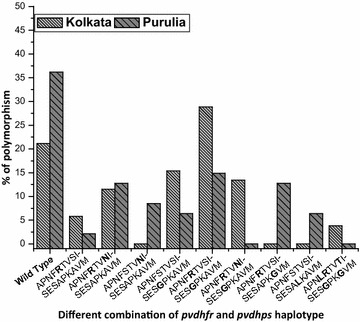 Frequency (% percentage) of different pvdhfr – pvdhps haplotype sequences in KMC and Purulia