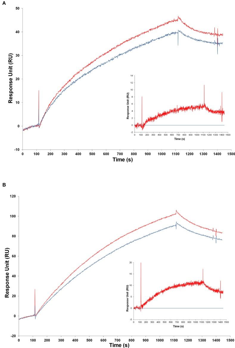 Analysis of transgenic and wild-type mice samples by SPR . Injection of samples from transgenic and from WT mice over the FPro10 anti-proNGF antibody (A) and over the Millipore anti-proNGF antibody (B) (blank subtracted curves). Representation of the SPR curves after subtraction of the WT mice signals. Curve of TgproNGF#72 mice subtracted the curve of WT for the FPro10 anti-proNGF antibody ( A —insert), and for the Millipore anti-proNGF antibody ( B —insert). In all panels: Red curve: TgproNGF#72, blue curve: WT.