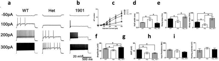 Normalization of neuronal activity in Dravet mice after CUR-1901 treatment. WT and Scn1a E1099X/+ mice were treated with a single IT injection of 5 μg of CUR-1901 or saline. (a) Representative traces of current clamp experiments in hippocampal parvalbumin-positive interneuron in WT and control Scn1a E1099X/+ mice (Het), compared to Scn1a E1099X/+ treated (Het_1901) mice. (b) Input/output function for (a). (c–i) Characteristics of hippocampal parvalbumin-positive neurons ( n = 6.5.8 respectively): (c) half-width of action potential (AP); (d) rise slope of AP; (e) decay slope of AP; (f) amplitude of AP; (g) afterhyperpolarization (AHP) amplitude of AP; (h) input resistance; (i) resting potential ( t -test with correction, p > 0.05). Mean ± S.E.M., * — p
