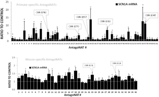 Summary of AntagoNAT screening data. Bars show fold difference in the SCN1A mRNA expression levels between mock-transfected controls and cells treated with 20 nM of AntagoNATs of different chemistry and sequence. Boxes point to AntagoNATs selected for in-depth studies based on their high SCN1A upregulation and effect consistency in different cell lines. For mouse, homology to human AntagoNATs was also taken into account. Each bar represents an average of 2 or more experiments in 2 different cell lines (HepG2 and SK-N-AS cells for human, 3T3 and Neuro2a cells for mouse-specific AntagoNATs, n = 10 or higher). Real time PCR data. Mean ± S.E.M. * — p