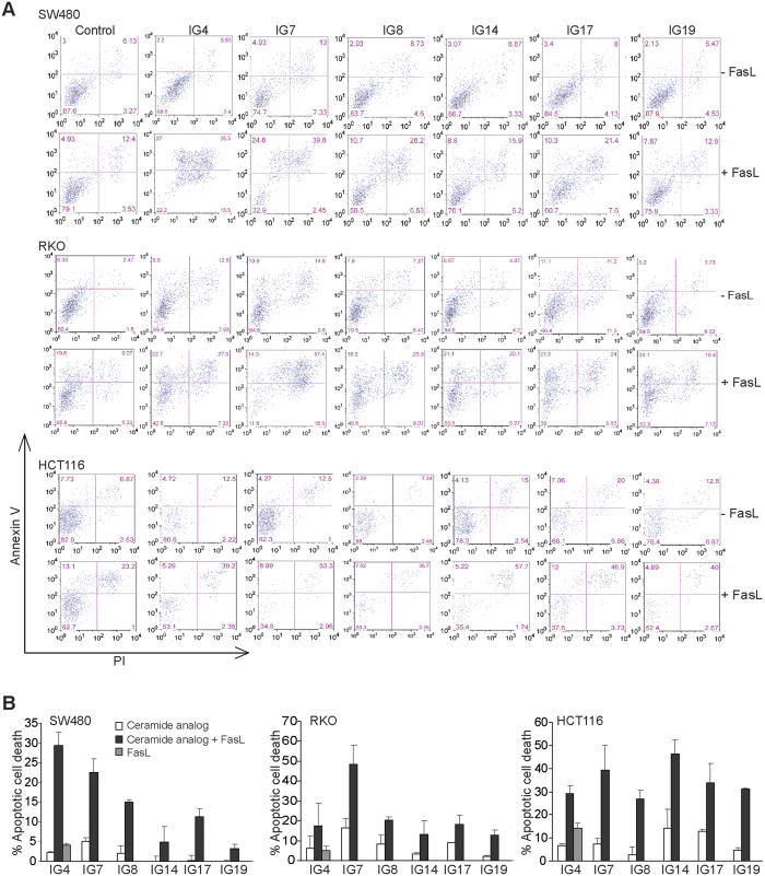 Identification of novel ceramide analogs that sensitize human colon carcinoma cells to FasL-induced apoptosis. ( A ) Human colon carcinoma SW480, RKO and HCT116 cells were cultured in the presence of the indicated ceramide analogs (10 μM), with or without MegaFasL (SW480 = 25 ng/ml, RKO = 50 ng/ml, and HCT116 = 10 ng/ml) for approximately 24 h. Both floating and adherent cells were harvested, stained with Annexin V and PI, and analyzed by flow cytometry. Shown are representative plots of apoptotic cell death. ( B ) Quantification of apoptotic cell death. % apoptotic cell death was calculated as % Annexin V + PI + cells in the presence of ceramide analogs plus MegaFasL - % Annexin V + PI + cells in the control group. Column: mean; Bar: SD.