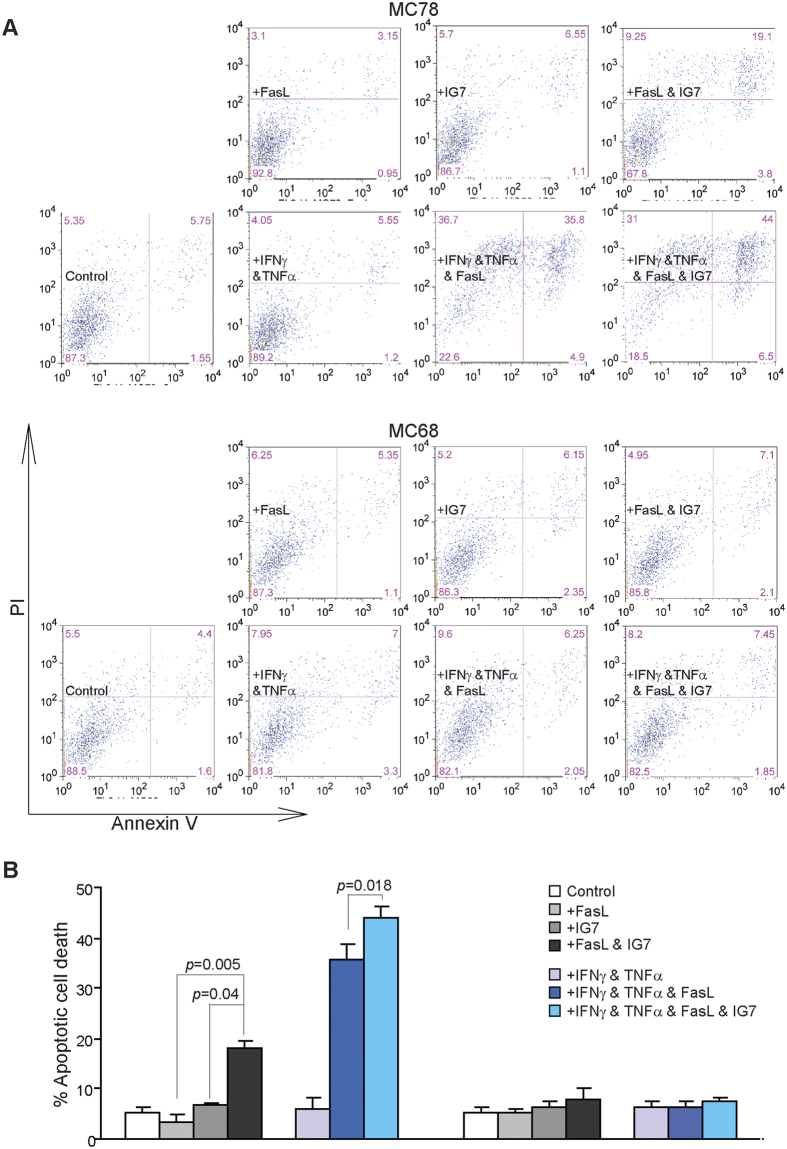 Ceramide analog enhances FasL-induced apoptosis in tumor cells in a Fas-dependent mechanism. ( A ) Tumor cells were treated as shown in the absence or presence of ceramide analog IG7 (10 μM) for approximately 24 h. Both floating and adherent cells were collected and stained with PI and Annexin V. Cells were then analyzed by flow cytometry. ( B ) Cells as shown in A are quantified for apoptosis. Percent apoptotic cell death was calculated as (% Annexin V + PI + cells of treated cells) − (% Annexin V + PI + cells in the absence of FasL). Column: mean; Bar: SD.