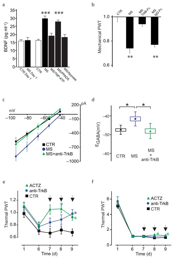 Altered Cl − homeostasis in spinal neurons and morphine-induced hyperalgesia are depend on P2X4R-BDNF-TrkB signaling a . ELISA-based measurement of BDNF release from cultured microglia treated with 100 nM morphine ( n = 14 trials, H: 30.17, *** P
