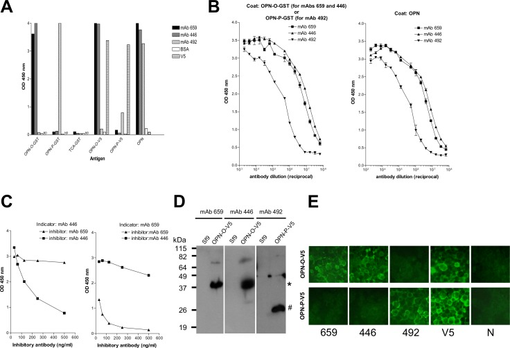 Characterization of the OPN-specific mouse mAbs. A) ELISA results showing binding specificity of the various mAbs (mAb 659, 446, and 492) to various OPN antigens (OPN-O-GST, OPN-P-GST, OPN-O-V5, OPN-P-V5, and full-length OPN), including TCA-GST (control negative containing human telomerase segment). Anti-V5 antibody (V5) and BSA are included as positive and negative control, respectively. B) ELISA results showing titration curves of individual mAbs (mAb 659, 446, and 492) against OPN-O-GST, OPN-P-GST or full-length OPN. C) Inhibition ELISA results showing mAb 659 and 446 do not cross-inhibit each other. Left panel shows the inability of mAb 659 to inhibit binding of biotin-labeled mAb 446 and the converse for right panel. D) Western blot results showing specific detection of the various insect cells-derived OPN antigens (OPN-O-V5, OPN-P-V5) by the various mAbs; 15% gel used; Sf9 is control insect-cell lysate. E) IFA results showing specific binding by various mAbs to insect cells expressing the appropriate OPN-O-V5 or OPN-P-V5 protein (magnification: 400 x). Anti-V5 antibody (V5) and normal mouse serum (N) used as positive and negative control, respectively.