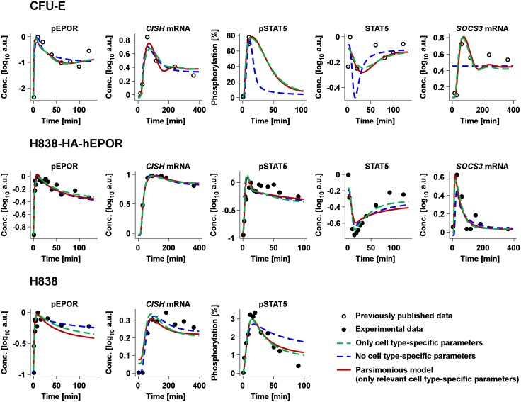 Model selection. The model trajectories for a selection of key pathway components are shown for CFU-E, H838 and H838-HA-hEPOR cells. This includes expression of the EPOR targets CISH mRNA and SOCS3 mRNA measured by qRT-PCR as well as pEPOR, pJAK2 and cytoplasmic STAT5 data measured by quantitative immunoblotting. The amount of pSTAT5 was determined by either mass spectrometry or quantitative immunoblotting. The closed circles represent experimentally measured data in H838 and H838-HA-hEPOR cells. CFU-E data previously published [ 19 ] are shown as circles. The lines depict the three applied model strategies: dashed green (only cell type-specific parameters), dashed blue (no cell type-specific parameters) and solid red (parsimonious model, only relevant cell type-specific parameters). The parsimonious model describes the data similarly to the model with only cell type-specific parameters, whereas the trajectories of the model without cell type-specific parameters are not in line with the experimental data, e.g. for SOCS3 mRNA in CFU-E and for pSTAT5 in H838. All data sets, replicates and trajectories of the parsimonious model are shown in S8 and S9 Figs.