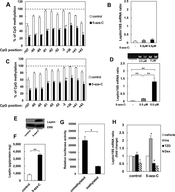 Effects of demethylation on leptin expression in 3T3-L1 cells. A, B: Promoter methylation (A) and leptin expression (B) in 3T3-L1 pre-adipocytes treated with 0.5 or 5 μM 5-azacytidine for 7 days. C, D: Promoter methylation (C) and leptin expression (D) in adipocytes derived from 3T3-L1 precursors treated with or without 5-azacytidine, measured 6 days after differentiation. Products from real-time qPCR were also separated on agarose. E, F: Expression (E) and secretion (F) of leptin in adipocytes derived from precursors treated with 5-azacytidine, as measured by western blotting and ELISA, respectively. Data were normalized to total protein concentration. G: Activity of methylated and unmethylated leptin promoter in adipocytes differentiated from 3T3-L1 cells. H: Leptin expression in serum-starved cells treated with 100 nM insulin (Ins), 1 μM troglitazone (Tro), or 1 μM dexamethasone (Dex). Cells are adipocytes derived from 3T3-L1 precursors treated with 5-azacytidine. Results are mean ± SEM. *, p