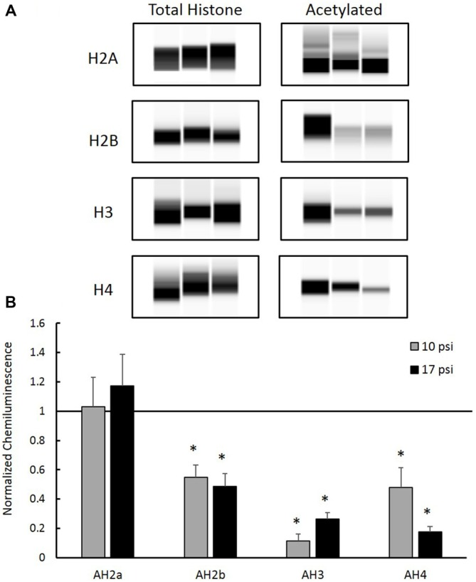 (A) Western blot images created by Compass Software (ProteinSimple, Santa Clara, CA, USA) representing modified and total histone expression in the prefrontal cortex (PFC) for each treatment group. No differences in total histone expression was observed for any histone protein. (B) Levels of acetyl-H2b (AH2b), acetyl-H3 (AH3), and acetyl-H4 (AH4) were significantly decreased compared to sham. No differences were observed between injury groups. *Indicates p