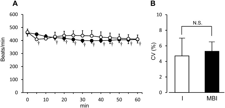 Measured heart rate in each anesthetic group. (A): heart rate over time in each group. (○): isoflurane-treated group. (●): group treated with a combination of midazolam, butorphanol, and isoflurane. (B): instability in heart rate in each group represented as coefficient variance (CV). Results are expressed as mean ± SD in 6 rats. †Significant difference from baseline ( P