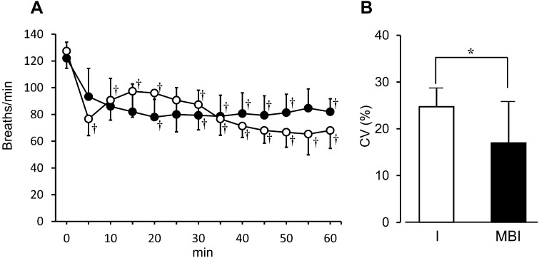 Measured respiratory rate in each anesthetic group. (A): respiratory rate over time in each group. (○): isoflurane-treated group. (●): group treated with a combination of midazolam, butorphanol, and isoflurane. (B): instability in respiratory rate over time represented by coefficient variance (CV). Results are expressed as mean ± SD in 6 rats. *Significant difference between groups ( P