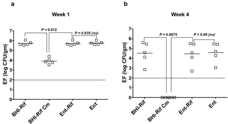 Complementation of Bac-21 production restores colonization phenotype by providing competitive advantage Bacteriocin activity was restored upon ectopic expression of bacABCDE (from pAM401) in EF+pPD1::Δ bacAB but not in EF lacking pPD1, indicating that the distal part of the bac operon ( bacFGHI) is necessary for bacteriocin expression and that the bacAB in-frame deletion is not polar on downstream genes. Mice (N=5) were given EF r +pPD1::Δ bacAB, bacABCDE + as described in the methods and abundance was determined by enumeration on m-Enterococcus agar (Ent agar), Ent agar plus rifampicin (Rf), or BHI agar with rifampicin. The presence of pAM401A:: bacABCDE+ (complementing plasmid) was determined by enumerating CFU on BHI agar with rifampicin and chloramphenicol (Cm). Fecal samples were obtained at week 1 (a) and week 4 (b) after transition to sterile drinking water. Horizontal lines indicate geometric mean. Each symbol represents an individual animal and data is a representative of two biologically independent experiments. EF s +pPD1:: ΔbacAB bacABCDE + stably colonized the GI tract (a), although in the absence of chloramphenicol selection, pAM401:: bacABCDE was gradually lost from the population (b). Over time, loss of pAM401:: bacABCDE resulted in the complemented strain reverting back to the bacteriocin-defective Δ bacAB strain, with the loss of bacteriocin activity. Nevertheless, this strain persisted in the gut, suggesting that Bac-21 was essential for clearing a niche for EF, but once cleared, EF uses other mechanisms to maintain colonization (a and b).