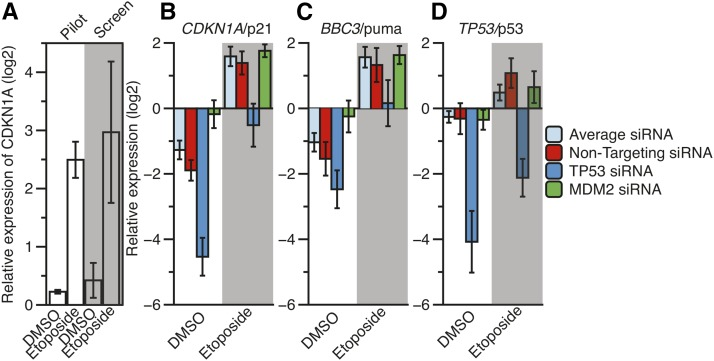 The normalized, relative expression of CDKN1A /p21 after DMSO or 8 hr of etoposide treatment (100 μM final) in a pilot RT-qPCR screen and in the experimental siRNA screen (A). Average (B) CDKN1A /p21, (C) BBC3 /puma, and (D) TP53 /p53 expression values under DMSO and etoposide conditions across each experimental RT-qPCR plate for nontargeting, TP53 , and MDM2 siRNA. Results from T-tests of pairwise comparisons can be found in Table 1 . DMSO, dimethyl sulfoxide; RT-qPCR, reverse transcription-quantitative polymerase chain reaction; siRNA, small interfering RNA.