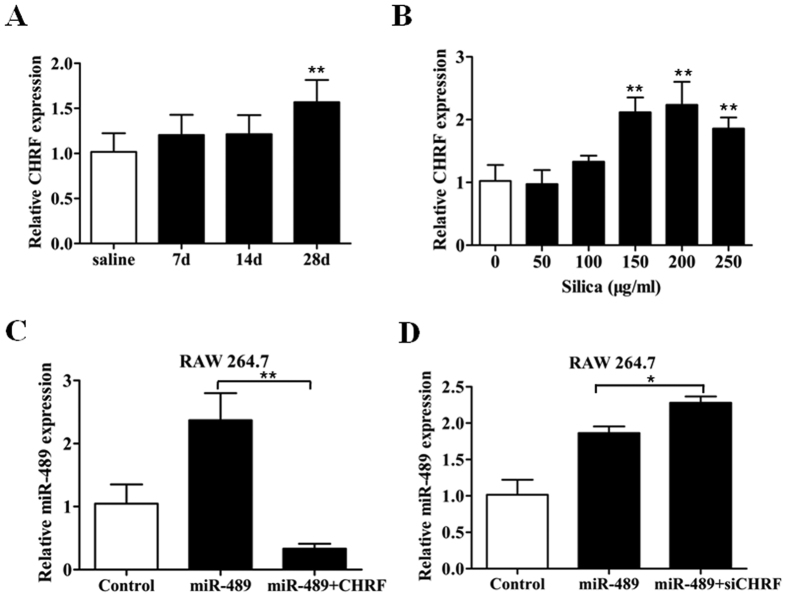 The lncRNA CHRF negatively regulates miR-489 expression. (A) qRT-PCR analysis of CHRF levels in mouse fibrotic lung tissue on day 7, 14, 28 ( n = 8 for each group) with ** P