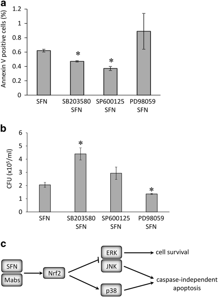 ( a ) Annexin V-FITC assay in THP-1-derived macrophages pretreated with MAPK inhibitors SB203580, SP600125, and PD98059. Infected cells were collected 24 h post infection. Data were from two independent experiments of n =10 000 events that were imaged and analyzed using MARKII imaging cytometer. * P