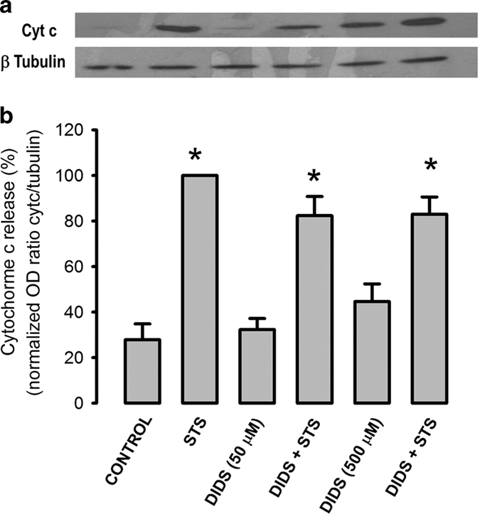 DIDS does not abolish STS-induced cyt c release. HeLa cells that were in the absence of serum for 19.5 h were preincubated with or without DIDS (50 or 500 μ M) for 30 min followed by STS (1 μ M) incubation for 4 h and lysed to determine cytochrome c release from mitochondria. ( a ) Representative western blots of cytochrome c (cyt c) and p tubulin in supernatants of cell lysates. Note that DIDS 500 μ M release some cyt c by itself. ( b ) The optical density ratio between signals of cyt c and p-tubulin was normalized using the STS-induced ratio as 100%. DIDS did not inhibit cytochrome c release, only reduced it by 20% at both concentrations of DIDS ( n =7). * P