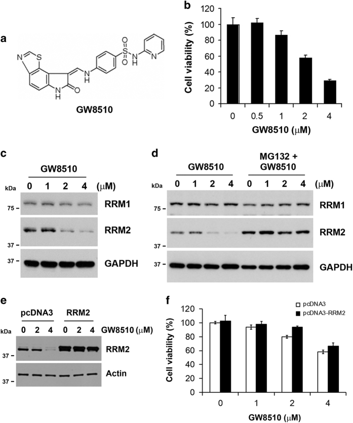 Identification of GW8510 as a potential RRM2 inhibitor. ( a ) The chemical structures of GW8510. ( b ) HCT116 cells were treated with various doses of GW8510 for 72 h. The cell viability was analyzed by an MTT assay. ( c ) HCT116 cells were treated with various doses of GW8510 for 24 h. The protein expressions were analyzed by western blots. ( d ) HCT116 cells were treated with various doses of GW8510 for 24 h in the absence or presence of 5 μ M MG132. The protein expressions were analyzed by western blots. ( e ) HCT116 cells were transiently transfected with a RRM2-overexpressing (pcDNA3-RRM2) or a control (pcDNA3) plasmid for 48 h, and then treated with indicated doses of GW8510 for 24 h. The protein expressions were analyzed by western blots. ( f ) HCT116 cells were transiently transfected with a RRM2-overexpressing (pcDNA3-RRM2) or a control (pcDNA3) plasmid for 24 h, and then treated with indicated doses of GW8510 for 72 h. The cell viability was analyzed by an MTT assay.