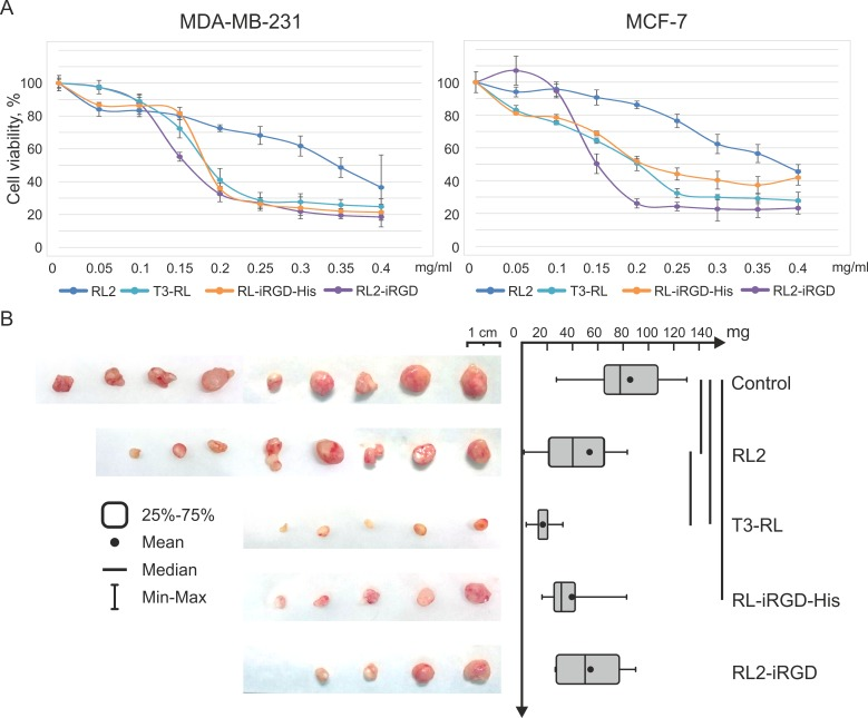 Fusion proteins enhanced cytotoxic outcome and delayed tumor development. (A) MDA-MB-231 and MCF-7 cells were treated with different concentrations of RL2, fusion proteins or saline (control) for 48 h and MTT analysis was performed. Tumor cell viability was determined relative to the viability of the control cells (incubated without the proteins). Data are presented as mean ± SD. (B) SCID mice with subcutaneously grafted MDA-MB-231 tumors, which reached an average (in the group) size of 20 ± 10 mm 3 , were subjected to intravenous injection of fusion proteins (RL2, T3-RL2, RL2-iRGD or RL-iRGD-His) at a dose of 40 mg/kg in saline three times every second day. The control group of mice received saline with the same mode of as administration the proteins. Tumors were excised and weighed on the 17th day after the last injection. Boxes represent the 25th, 50th and 75th percentiles. Squares with lines represent the median. Whiskers represent minimum/maximum. Data were statistically analyzed using one-way ANOVA with post hoc Fisher test; a p value