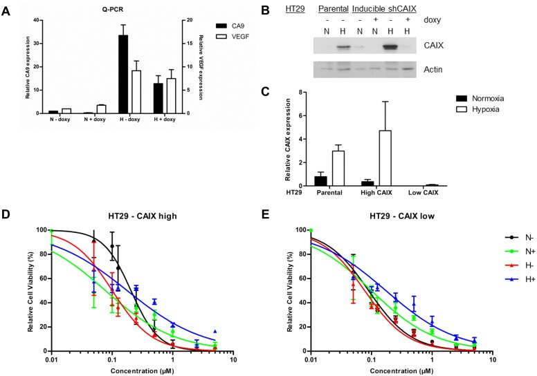 Effect of S4 on doxorubicin efficacy in HT29 –CAIX high and HT29 –CAIX low cells. Exposing HT29 cells to doxycycline (doxy) reduced CA9 mRNA levels during normoxia (N) and hypoxia (H), whereas VEGF levels were unaffected ( A ). CAIX protein levels minimized in HT29 –CAIX low cells when exposed to doxycycline ( B ). Quantification of three independent biological repeats showed minimal residual CAIX protein expression in HT29 –CAIX low cells as compared to parental cells or HT29 –CAIX high cells without a KD ( C ). Cell viability assays of HT29 –CAIX high ( D ) or HT29 –CAIX low cells ( E ) with increasing concentrations of doxorubicin. Cells were exposed to vehicle (black) or S4 (green) during normoxia (N), or to vehicle (red) or S4 (blue) during hypoxia (H). Results of three independent biological repeats are shown (mean ± SEM).