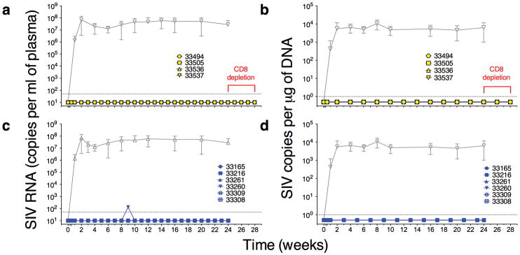 SHIV SF162P3 -associated viremia is not established in plasma or PBMC of NmAb-treated infants ( a,c ) Quantified virus in blood and ( b,d ) peripheral blood cells in both NmAb dosing groups of male and female infant rhesus macaques ( n = 10). Plasma viral loads were assessed by measurements of SIV viral RNA in blood using a quantitative reverse-transcription PCR (QRT-PCR) assay and in ( b ) PBMC by quantitative PCR (QPCR). CD8 + T cell depletion study timeline is shown in red. Data shown in gray indicate mean plasma virus (+/− SD) from eight historical controls from an earlier study 18 , 30 .