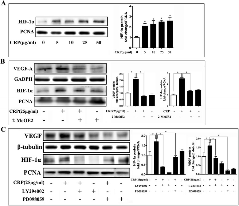 CRP stimulated VEGF expression through HIF-1α, which was linked to activation of the PI3K/AKT1 and MAPK/ERK1/2 pathways. a CRP increased HIF-1α production as assessed by western blotting. b HIF-1α inhibitor (2-methoxyestradiol, 10 μM) prevented CRP-induced HIF-1α and VEGF protein expression. c Effects of kinase inhibitors on CRP-induced HIF-1α and VEGF expression examined by western blotting. MAPK and PI3K signaling pathway inhibition suppressed CRP-induced HIF-1α and VEGF expression. Columns , mean; bars , SE. * p