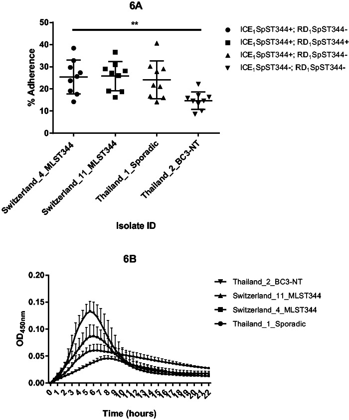 Adherence of S. pneumoniae to human epithelial cells ( A ) and in vitro growth ( B ). Detroit nasopharyngeal epithelial cell lines were exposed to non-Ec- Sp containing or lacking ICE 1 Sp ST344 and RD 1 Sp ST344, respectively ( A ). Adherence was determined at 30 min and calculated as the proportion of recovered bacteria to the inoculum. Experiments were repeated three times (three times on three different days: Indicated are mean and SD (standard deviation)). Swiss and Thai strains were classic and sporadic non-Ec- Sp , respectively. For the nine adherence experiments, ordinary one-way ANOVA resulted in P = 0.0052. See text for details. MLST, multilocus sequence type. Isolates of the BC3-NT lineage have been recently defined ( Chewapreecha et al. 2014 ). Measurement of planktonic growth was done in 96-well microtiter polystyrene plates and OD450nm was measured on an ELISA plate reader every 30 min for 22 h ( B ). Each experiment included three technical replicates and each experiment was performed three times.