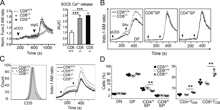 Modulation of TCR-induced responses from CD6 −/− developing and mature T cells. (A, left) Fluorescence microscopy assessment of SOCE over time in Fura-2 AM–loaded thymocytes from CD6 +/+ ( n = 199 cells, open circles), CD6 −/− ( n = 188 cells, gray filled circles), and CD5 −/− ( n = 198 cells, black filled circles) mice after exposure to 145.2C11 mAb (αCD3) and Fc-specific antiserum (αIgG; n = 4 mice/genotype). (right) SOCE as represented by mean ± SEM of area under curve (AUC) from the same experiment. (B) FACS analysis of i[Ca 2+ ] over time in Indo-1 AM–loaded DP, CD8 + SP, and CD4 + SP cells from CD6 +/+ (black solid line) and CD6 −/− (gray solid line) mice exposed to biotinylated 145.2C11 mAb (αCD3) plus Streptavidin (SAv). Data are representative of three independent experiments. (C, left) FACS analysis of CD5 expression on DP thymocytes from CD6 +/+ (black solid line), CD5 +/− (black dashed line), and CD6 −/− (gray shaded line). (right) FACS analysis of i[Ca 2+ ] over time of Indo-1 AM–loaded DP cells from CD6 +/+ (black solid line), CD5 +/− (black dashed line), CD6 −/− (gray solid line) and CD5 −/− (gray dashed line) mice, upon exposure to αCD3 mAb plus SAv, as assessed in B. (D) Dot density graphs showing the percentage (mean ± SEM) of major thymocyte subsets (left) and of LN CD4 + and CD8 + T EM and T CM subsets (right) from CD5 +/− (black filled circles), CD6 +/+ (open circles), and CD6 −/− (gray filled circles) mice. The results shown are from one representative of two experiments performed. **, P