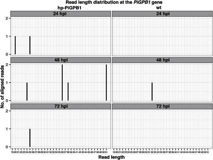 Small RNAs complementary to the PiGPB1 gene. Distribution of small RNA reads homologous to the PiGPBI gene in transgenic hp-PiGPB1 and wild-type potato plants at 24, 48, and 72 hpi based on <t>Illumina</t> sequencing.