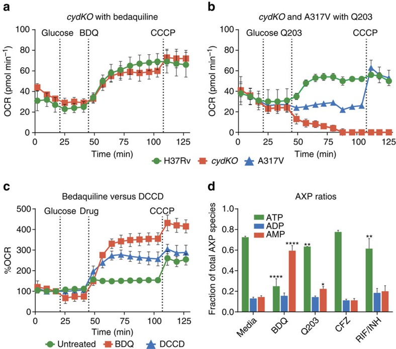 Bioenergetic analysis of <t>Mtb</t> <t>H37Rv,</t> cytochrome bd knockout ( cydKO ), and cydKO strain with Q203 resistance SNP (A317V) to ETC drugs. At indicated times, 2 g l −1 glucose was added, followed by either Q203, BDQ, or DCCD, followed by 2 μM CCCP. ( a ) 300 × MIC 50 BDQ treatment has a very similar effect on H37Rv and cydKO . ( b ) 300 × MIC 50 Q203 treatment causes H37Rv OCR to increase, however cydKO OCR drops to zero, while A317V OCR is unchanged. The untreated media OCR profiles of the Mtb H37Rv, cydKO and A317V strains are provided in Supplementary Fig. 4 . ( c ) 100 μM of the ATP synthase inhibitor DCCD causes a similar OCR increase to 30 × MIC 50 BDQ, although somewhat less in magnitude at these concentrations. ( d ) H37Rv Mtb was cultured for 24 h with 30 × MIC 50 of BDQ, Q203, CFZ, a RIF/INH combination, or media control. Relative abundance of ATP, ADP, and AMP was measured by LC-MS/MS. Standard deviations of three technical replicates are shown, all experiments were performed at least twice. * P