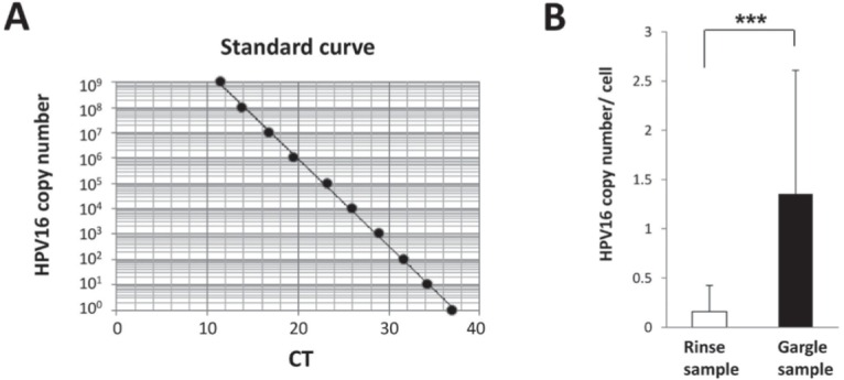 Quantification of <t>HPV16</t> viral copy number by real-time <t>PCR.</t> (A) Standard curve indicating CT value vs. HPV16 copy number. A standard curve was calculated by plotting obtained CT values against serial 10-fold dilutions produced with HPV16 copy numbers ranging from 100 to 109. (B) The average number of viral copies was significantly higher in the gargle samples as compared to the oral rinse samples (0.16±0.27 vs. 1.35±1.26 per cell) (***P