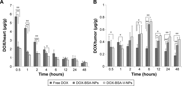 Biodistribution of free DOX, DOX-BSA-NPs and DOX-BSA-V-NPs in ( A ) heart and ( B ) tumor. Notes: Time profiles of DOX accumulated in the ( A ) heart and ( B ) tumor after intravenous injection of different DOX formulations with a DOX dose of 5 mg kg −1 . DOX/heart and DOX/tumor are the ratios of the DOX amount in the heart (μg) and tumor (μg) to the tumor weight (g), respectively. * P