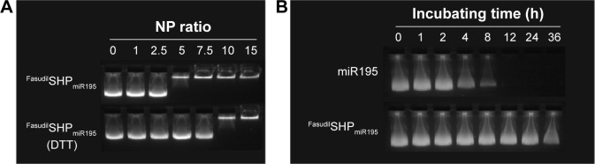 Agarose gel electrophoresis. Notes: ( A ) Condensation ability of miR195 with Fasudil SHP miR195 and DTT-triggered miR195 release from Fasudil SHP miR195 . ( B ) Stability test of Fasudil SHP miR195 in 50% FBS conditions at 37°C. Abbreviations: DTT, dithiothreitol; FBS, fetal bovine serum; h, hour; miR195, miRNA-195.
