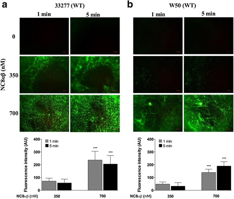 Bacteriocin PLNC8 αβ from L. plantarum NC8 is efficient against P. gingivalis . The antimicrobial activity of PLNC8 αβ on wild type (WT) P. gingivalis ATCC 33277 ( a ) and W50 ( b ), respectively, was visualized using the fluorescent dye Sytox® Green. Images were acquired using Olympus BX41 at 40× magnification. The antimicrobial effect of PLNC8 αβ was rapid and a significant number of P. gingivalis cells could fluoresce already after 1 min, indicating damaged membranes. Representative images and quantitative data of at least three independent experiments are shown. Quantitative data were normalized and the controls at each time point were set to 1. *** p