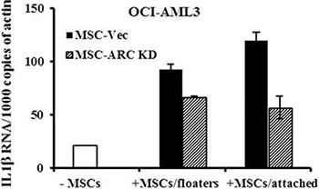 MSCs induce the expression of IL1β in AML cells OCI-AML3 cells were cultured alone or co-cultured with ARC KD or control MSCs for 48 h. CD45 + CD90 − AML cells were FACS-sorted from the floaters (collected from cells in the suspension and after PBS wash) and attached (collected by trypsinization) cells. IL1β RNA levels were determined in sorted OCI-AML3 cells and the cells cultured alone by real-time RT-PCR.