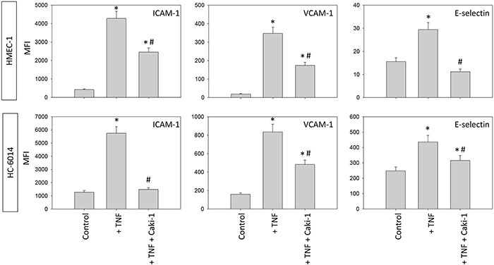 Endothelial surface expression of adhesion receptors on HUVEC after TNF-alpha [500 U/ml] stimulation and/or co-cultivation with Caki-1 cells under flow conditions Expression of ICAM-1, VCAM-1 and E-selectin after 24h TNF-alpha [500 U/ml] stimulation. MFI = mean relative fluorescence intensity. *indicates significant difference to untreated controls. #indicates significant difference to TNF-alpha/histamine stimulated HUVEC. n=6.