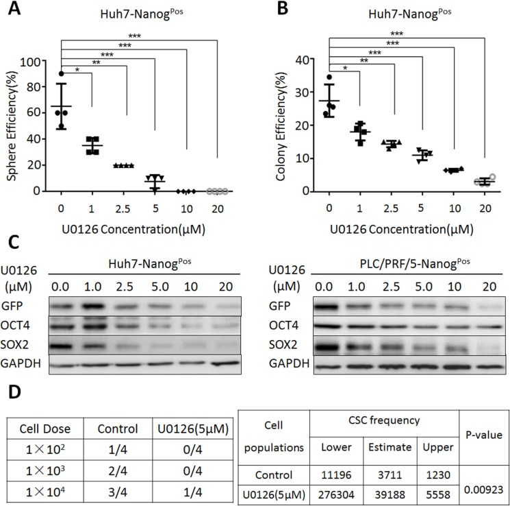 MEK1 signaling activity is required for the maintenance of liver CSC self-renewal ( A ) Huh7-Nanog Pos cells were co-cultured with various concentrations of U0126 (0 μM, 1 μM, 2.5 μM, 5 μM, 10 μM, 20 μM) in sphere-forming conditions for 7 days, counted at the same magnification. ( B ) Huh7-Nanog Pos cells were treated with different concentrations of U0126 (0 μM, 1 μM, 2.5 μM, 5 μM, 10 μM, 20 μM) and grown for 14 days. Cells were stained with crystal violet and counted. ( C ) Western blot analysis of stemness protein expression in Huh7- and PLC/PRF/5-Nanog Pos cells, which co-cultured with various concentrations of U0126 (0 μM, 1 μM, 2.5 μM, 5 μM, 10 μM, 20 μM) for 48 hours. ( D ) Huh7-Nanog Pos cells were treated with 5 μM U0126 for 14 days, while the negative control treated with DMSO for 14 days. Then we subcutaneous injected 1 × 10 2 , 1 × 10 3 , 1 × 10 4 cells into NOD-SCID mice. After 30 days, we harvested and counted the tumors. Extreme Limiting Dilution Analysis was acquired from http://bioinf.wehi.edu.au/software/elda/ .