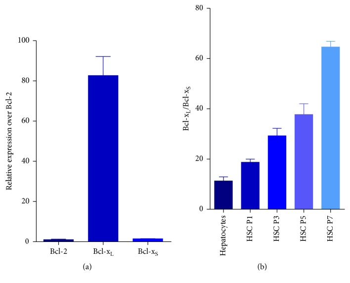 Gene expression of Bcl-x S and Bcl-x L in human HSCs. Real-time PCR analysis of RNA extracted from human HSCs of different passages. (a) The gene expression of Bcl-2, Bcl-x L , and Bcl-x S was compared in activated human HSCs (passage 7). (b) The relative expression ratio of Bcl-x L and Bcl-x S was compared in human hepatocytes and human HSCs at different passages.