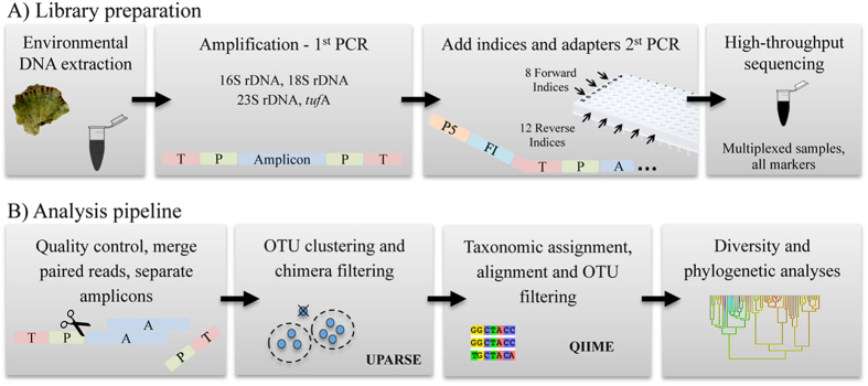 The multi-marker metabarcoding approach. The library preparation ( A ) consists of a 2-step PCR amplification: the first PCR amplifies the target markers and the second PCR adds the indices and the <t>Illumina</t> adapters (T = tail, P = amplicon-specific primer, P5 = Illumina adapter, FI = forward index, A = amplicon). The amplicons are then purified with magnetic beads, quantified and pooled together to be sequenced in an Illumina's MiSeq platform. The sequence reads of the 4 markers are teased apart in the analysis pipeline ( B ) based on <t>primers</t> sequences, and go through a series of quality control steps (including pipelines available in QIIME 28 ), OTU clustering (using UPARSE 46 ), alignment and classification.