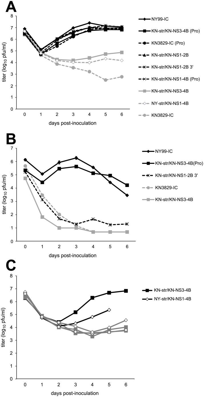 Growth and temperature sensitivity of WNV NY99/KN3829 chimeras in AMCR PBMCs. (A) Growth of chimeric viruses in PBMCs at 37°C. (B) Growth of selected chimeric viruses in PBMCs at 42°C. N = 3 replicates per virus. (C) Variability among replicates in PBMC culture at 37°C. Individual replicates of PBMC cultures of KN-str/KN-NS3-4B and NY-str/KN-NS1-4B are shown. No supernatant was available for one replicate of NY-str/KN-NS1-4B at 6 dpi due to fungal contamination. Filled squares represent KN-str/KN-NS3-4B, and open diamonds represent NY-str/KN-NS1-4B. Viral RNA was extracted from 5 dpi (NY-str/KN-NS1-4B) or 6 dpi (KN-str/KN-NS3-4B) supernatants of cultures shown in black, and the NS3-249 region was sequenced. Cultures shown in grey were not sequenced.